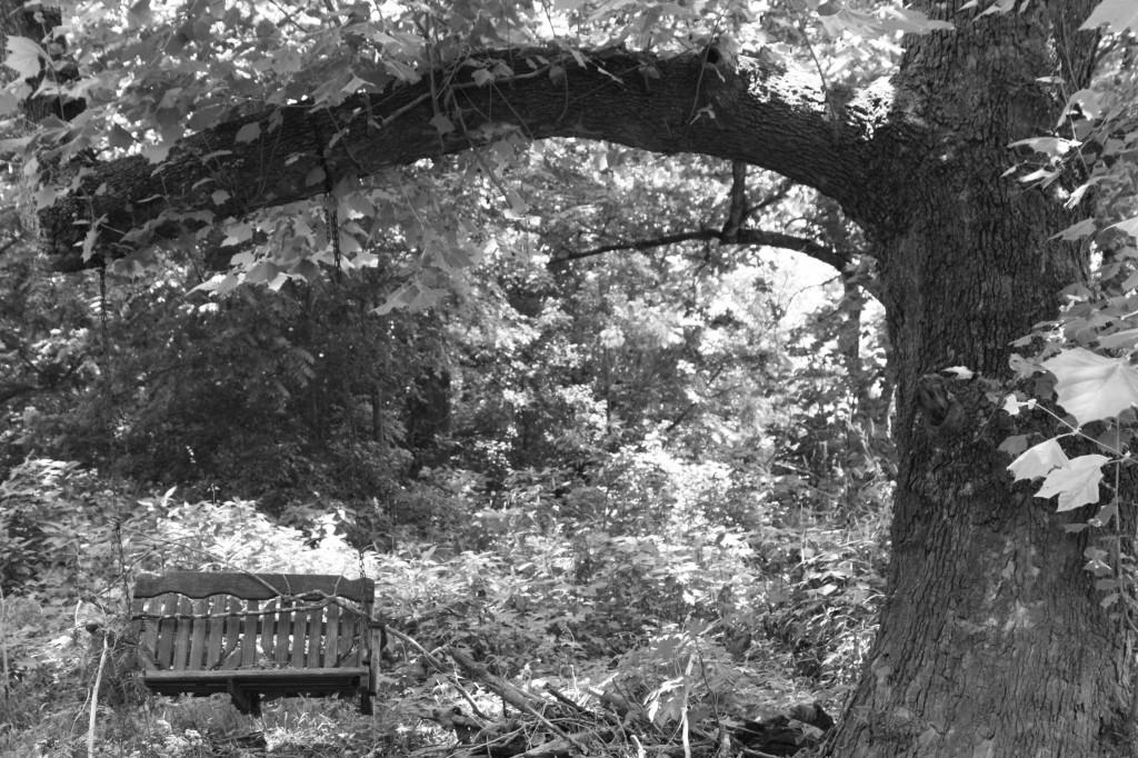 Swing under tree